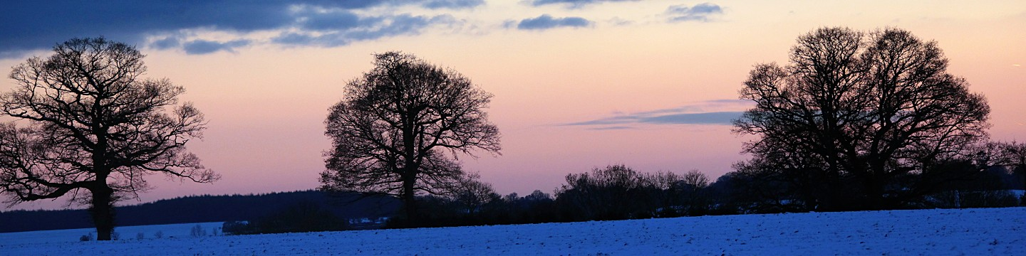 Trees silhouetted against sunset and snow on the fields